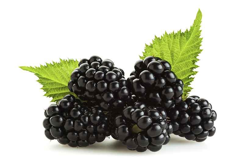 blueberries  GLB